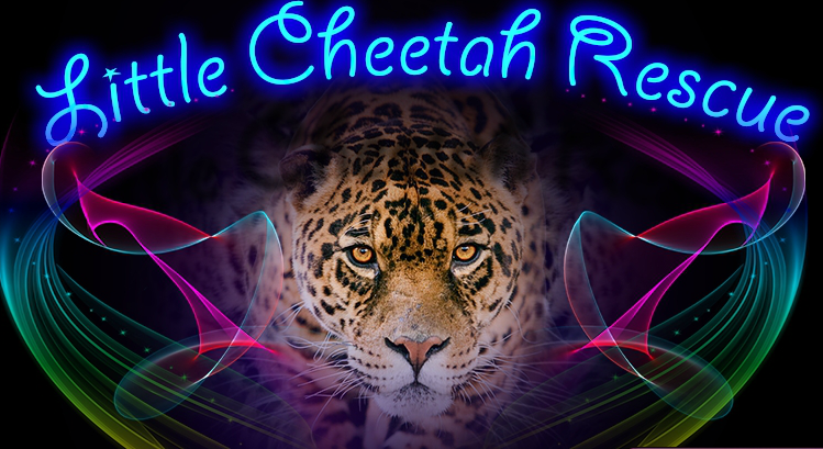 Games4King Cheetah Rescue Rescue